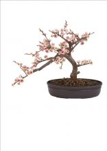 Silk Bonsai Cherry Tree